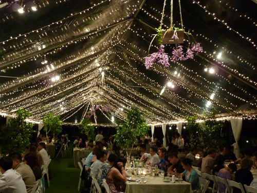 Live Tree Centerpieces in a Lighted Tent at a Green Wedding in Hawaii by Destination Wedding Planner, Mango Muse Events