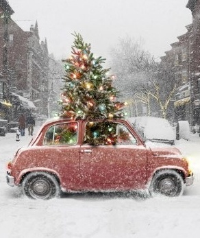 Christmas tree popping out of the roof of a car Christmas party inspiration shared by Destination wedding planner Mango Muse Events