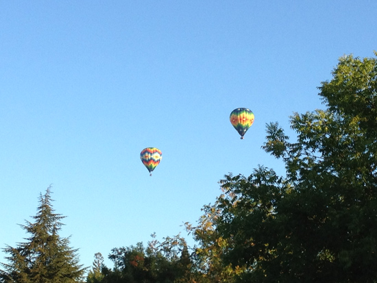 Hot air balloons over California wine country