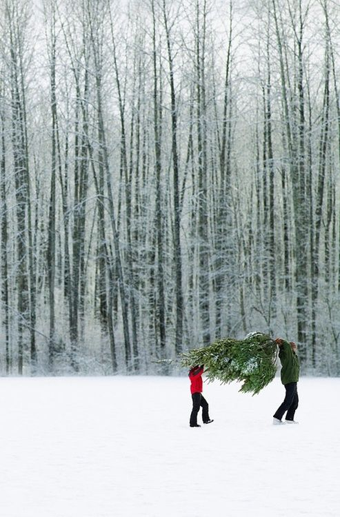 2 people carrying a Christmas tree in the snow