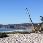 Bird on the beach in Carmel