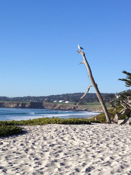 Bird on the beach in Carmel