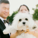 Puppy at San Francisco wedding by Jamie Chang destination wedding planner of Mango Muse Events.