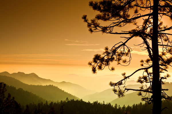 Unplugged destination vacations. Sequoia National Park, California.