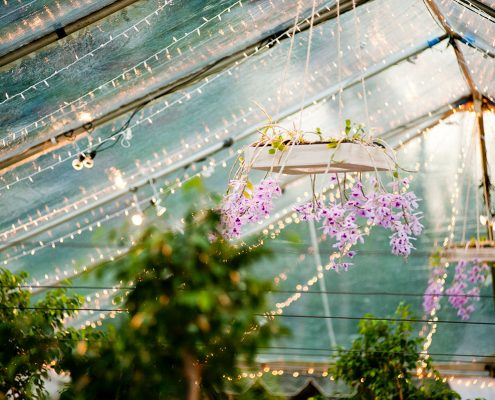 Clear tent with lights, live trees and hanging orchids for a Hawaii wedding by Destination wedding planner Mango Muse Events