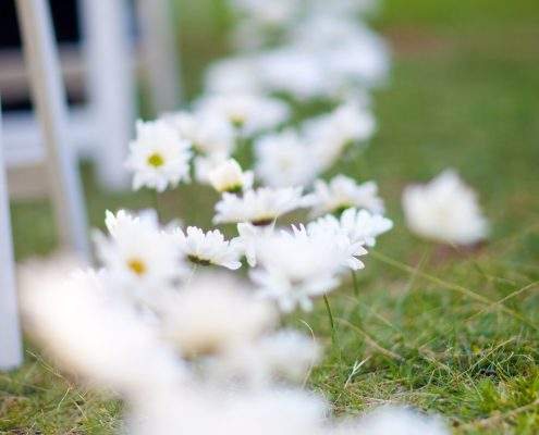 Ceremony aisle with daisies at a Hawaii wedding by Destination wedding planner Mango Muse Events