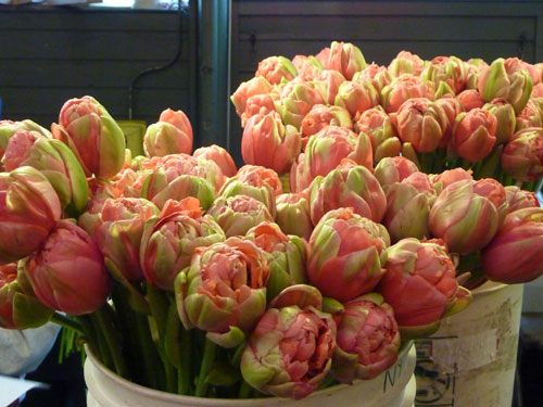 Seattle Pike Place Market Peony Tulips for May flower inspiration by Destination wedding planner, Mango Muse Events