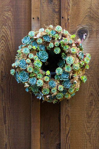 Green succulents for Green wedding inspiration by Destination wedding planner, Mango Muse Events