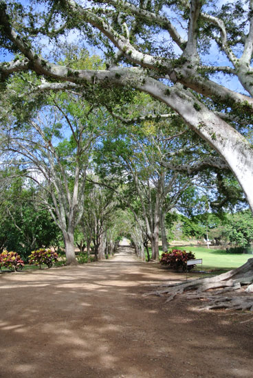 Tree lined entrance to Dillingham Ranch Hawaii wedding venue for a Hawaii destination wedding by Destination wedding planner Mango Muse Events