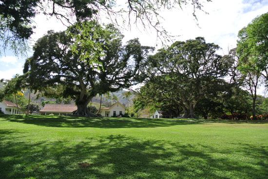 Open green lawn of Dillingham Ranch a Hawaii wedding venue for a Hawaii destination wedding by Destination wedding planner Mango Muse Events