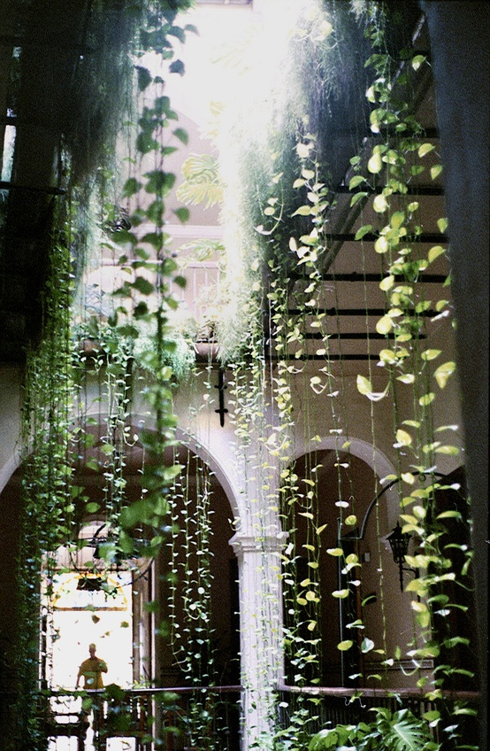 Hanging green vines in a building atrium as an example of design with live plants shared by Event Designer Mango Muse Events