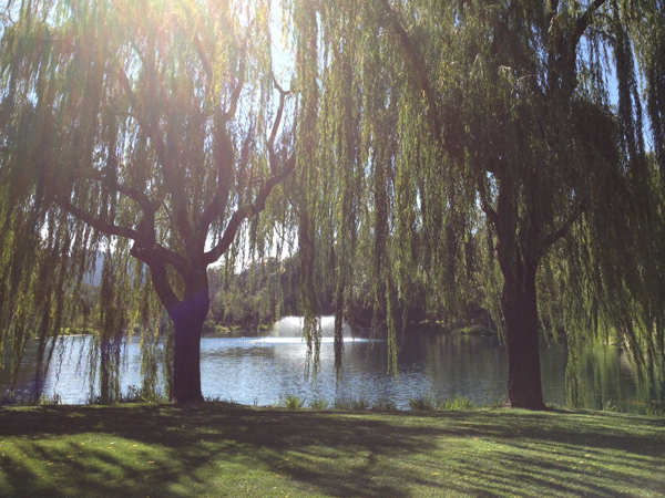 View of the lake and willows at Black Swan Lake a private estate for destination weddings by Destination wedding planner Mango Muse Events