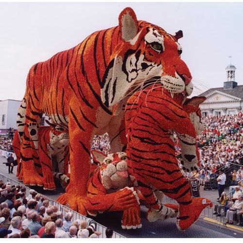 Dutch flower parade - a tiger float made of dutch dahlias.