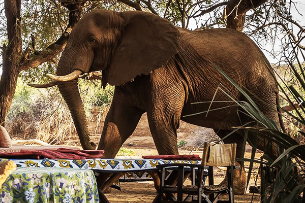 Unplugged destination vacations. Elephant Watch Camp, Kenya, Africa.