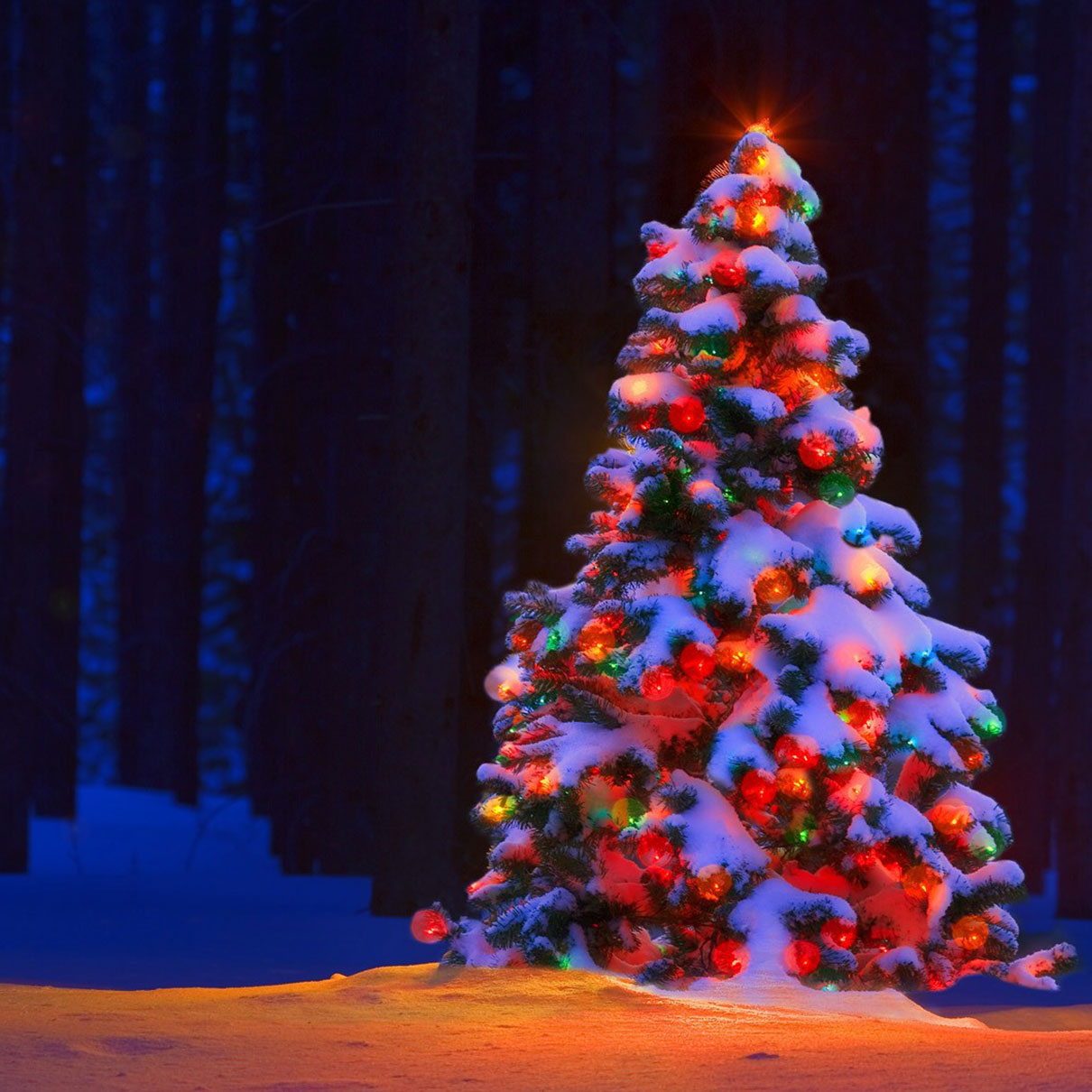 christmas-tree-snow-feature - Mango Muse Events