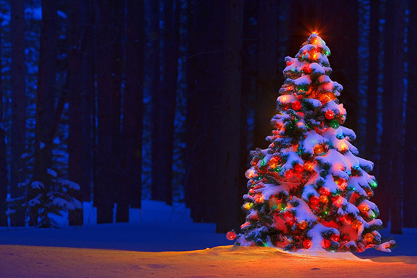 Lighted Christmas tree in the snow
