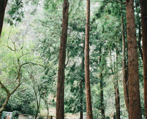 Wedding ceremony in the redwoods at a San Francisco destination wedding by Destination wedding planner Mango Muse Events