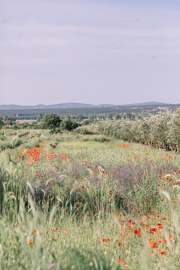 Wild flower fields in Biograd, Croatia