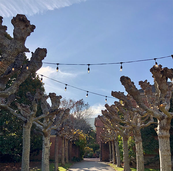 Bare trees with string lights at Filoli, a winter wedding idea by SF Bay Area wedding planner Mango Muse Events